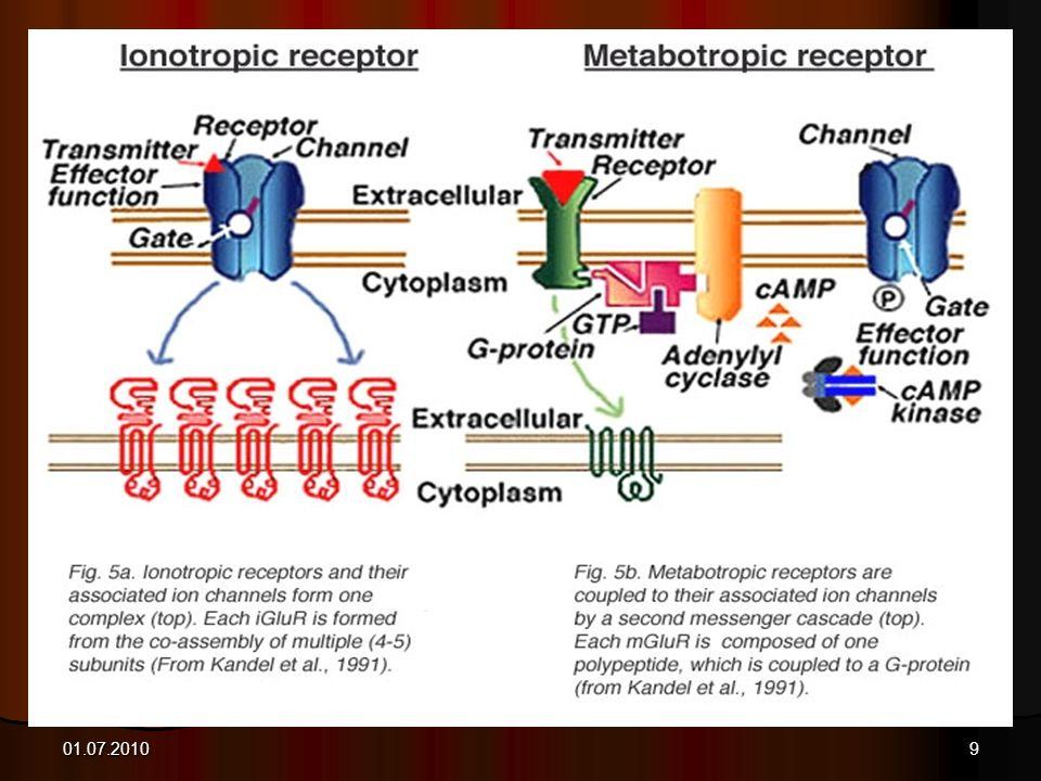 Glutamate receptors 01.07.2010
