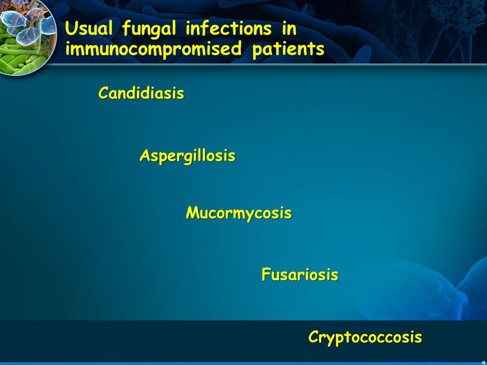 Usual fungal infections in immunocompromised patients