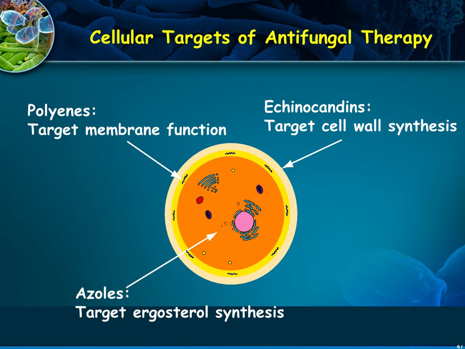 Cellular Targets of Antifungal Therapy