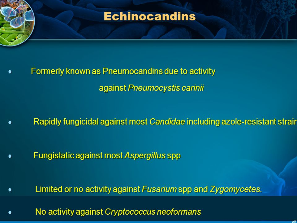 Echinocandins Formerly known as Pneumocandins due to activity