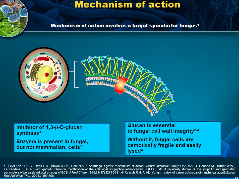 Mechanism of action1-4 Mechanism of action involves a target specific for fungus4. Glucan is essential to fungal cell wall integrity2-4.