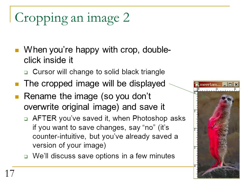 Cropping an image 2 When you're happy with crop, double-click inside it. Cursor will change to solid black triangle.