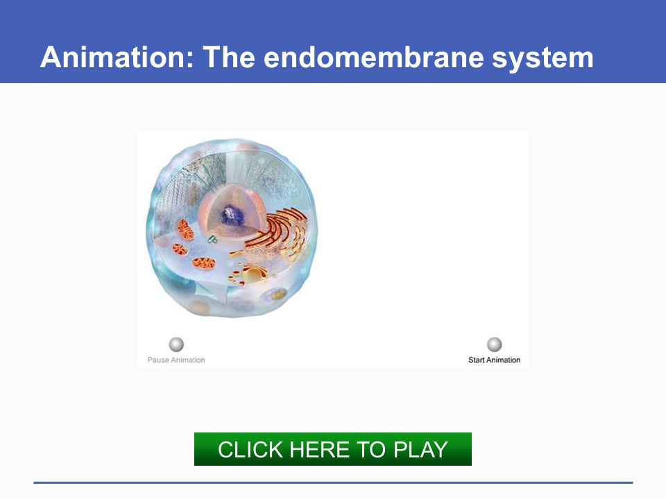 Animation: The endomembrane system