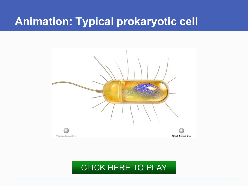 Animation: Typical prokaryotic cell