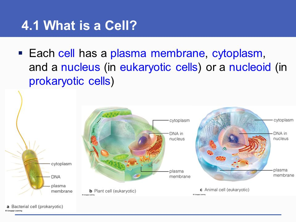 4.1 What is a Cell.