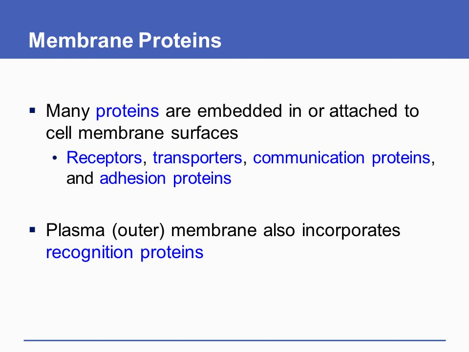 Membrane Proteins Many proteins are embedded in or attached to cell membrane surfaces.