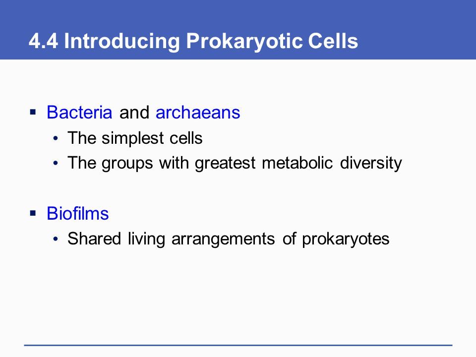 4.4 Introducing Prokaryotic Cells
