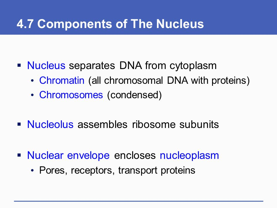 4.7 Components of The Nucleus