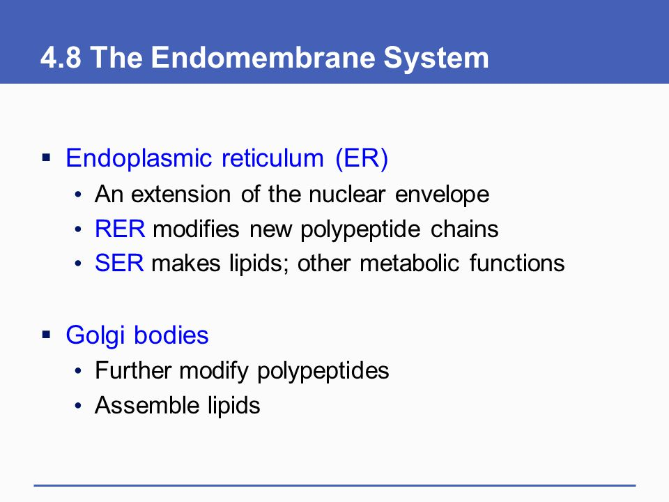 4.8 The Endomembrane System