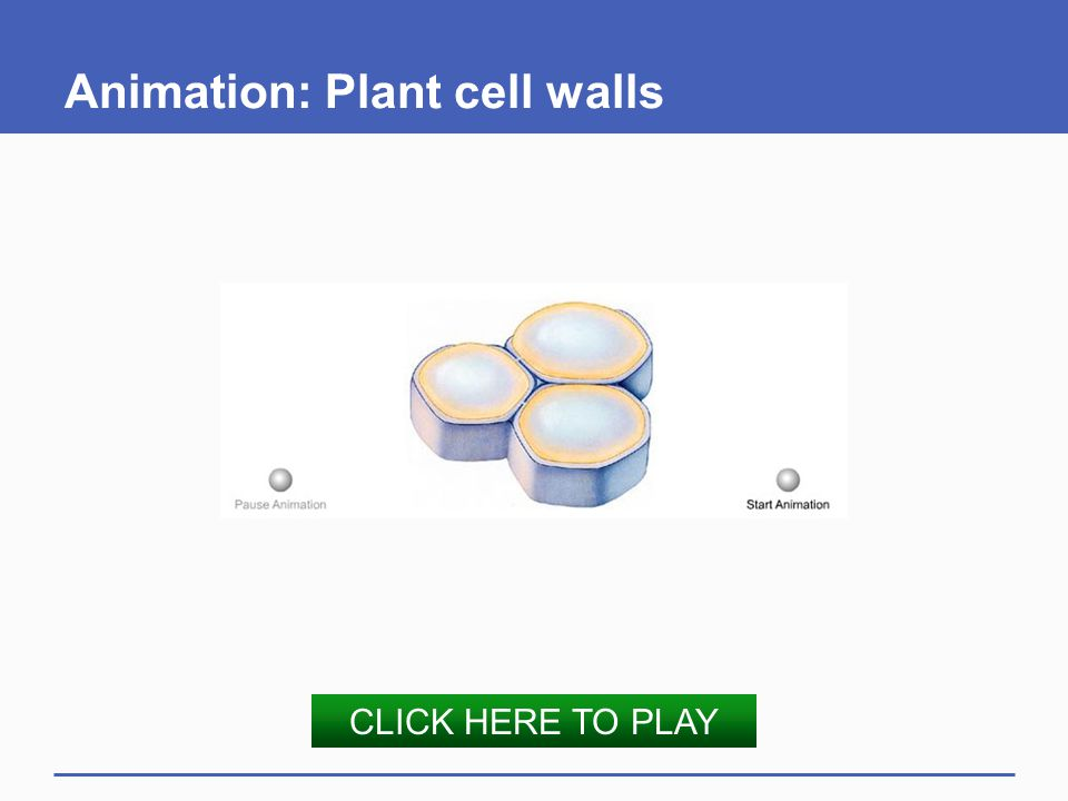 Animation: Plant cell walls