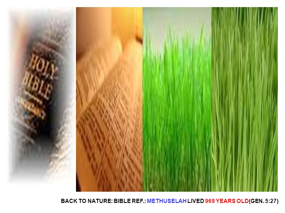 BACK TO NATURE: BIBLE REF.: METHUSELAH LIVED 969 YEARS OLD(GEN. 5:27)