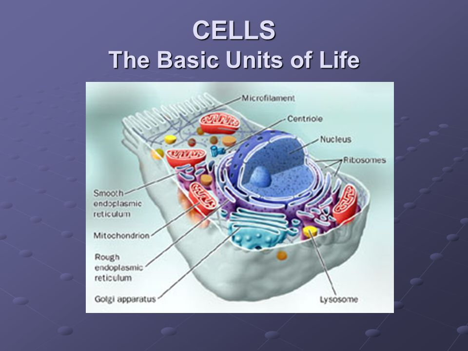 CELLS The Basic Units of Life