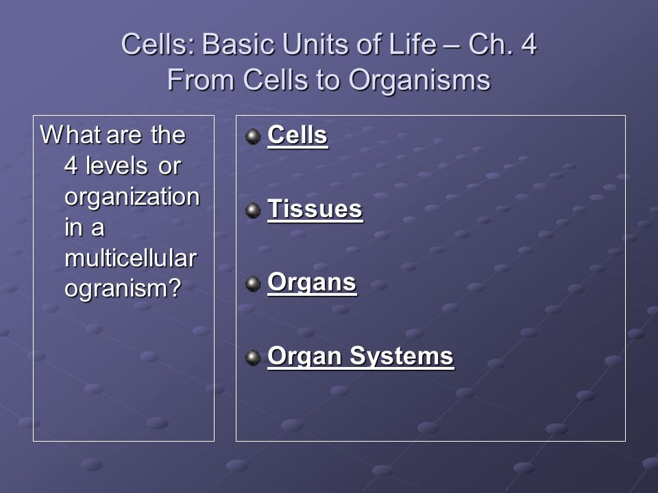 Cells: Basic Units of Life – Ch. 4 From Cells to Organisms