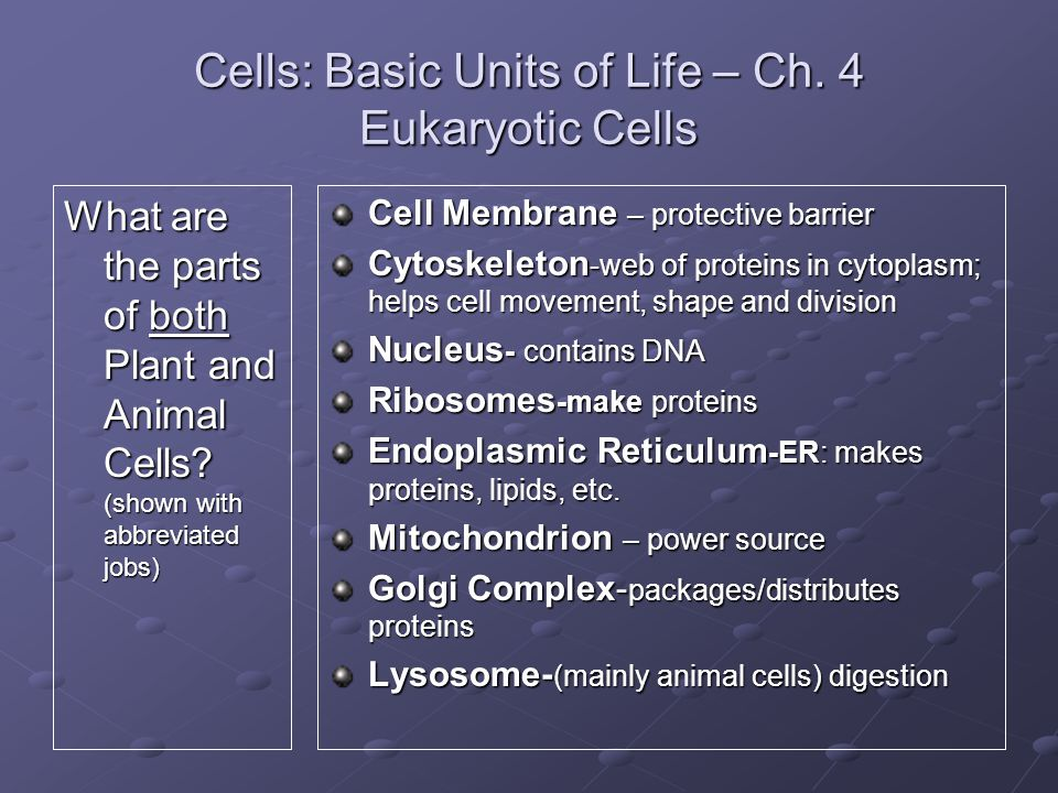 Cells: Basic Units of Life – Ch. 4 Eukaryotic Cells