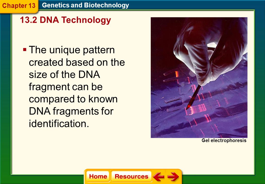 Chapter 13 Genetics and Biotechnology. 13.2 DNA Technology. Gel electrophoresis.