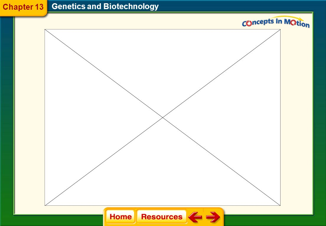 Chapter 13 Genetics and Biotechnology