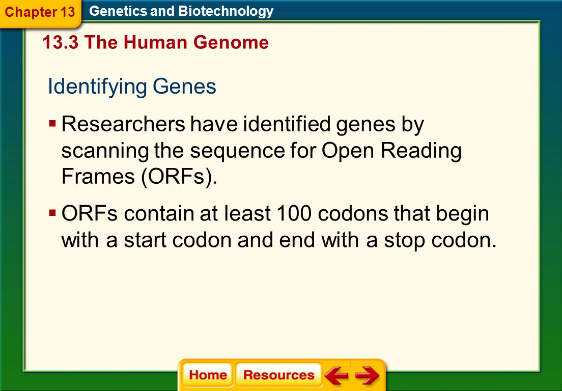 Chapter 13 Genetics and Biotechnology. 13.3 The Human Genome. Identifying Genes.