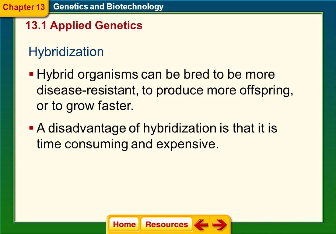 Chapter 13 Genetics and Biotechnology. 13.1 Applied Genetics. Hybridization.
