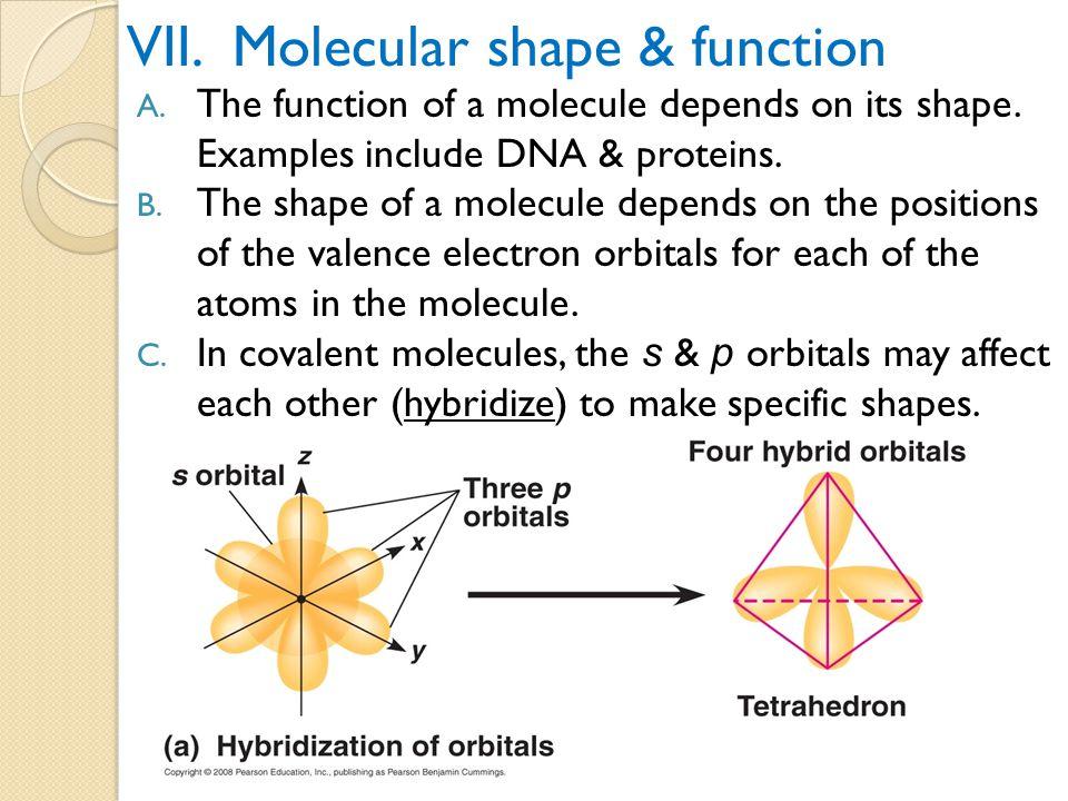 VII. Molecular shape & function