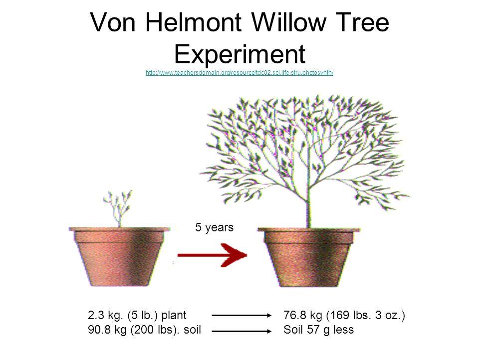 Von Helmont Willow Tree Experiment http://www. teachersdomain
