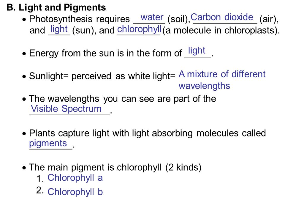 B. Light and Pigments Photosynthesis requires ______ (soil), ____________ (air), and ____ (sun), and ________ (a molecule in chloroplasts).
