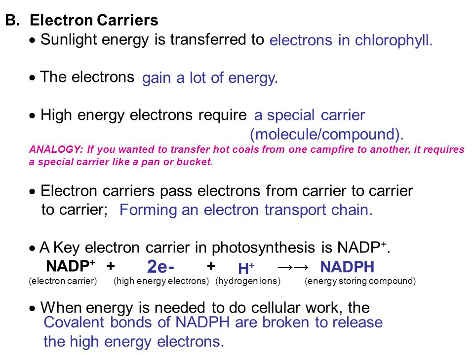 2e- B. Electron Carriers Sunlight energy is transferred to