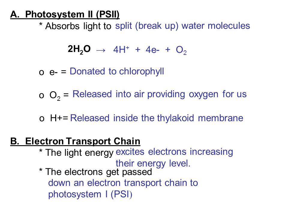 A. Photosystem II (PSII). Absorbs light to. 2H2O. o e- =. o O2 =