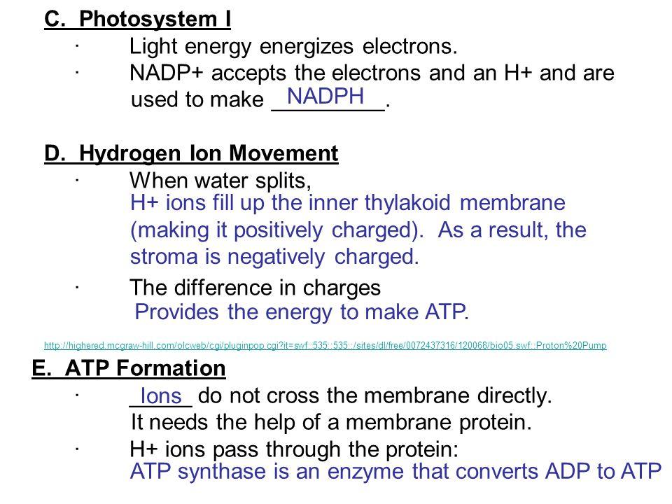 C. Photosystem I. · Light energy energizes electrons