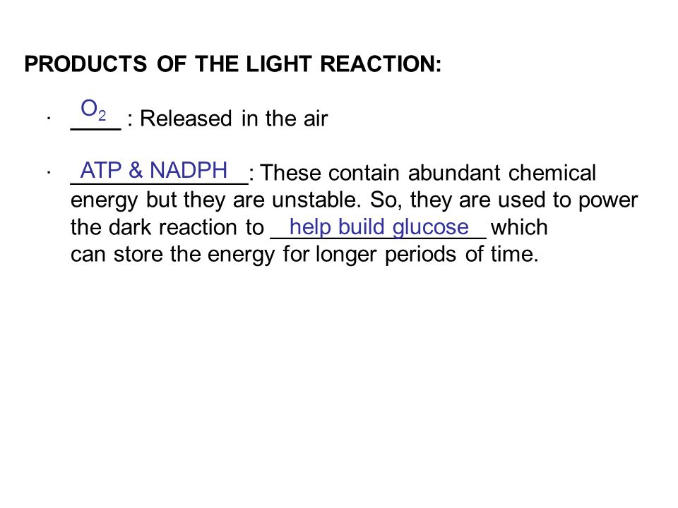 PRODUCTS OF THE LIGHT REACTION: · ____ : Released in the air · ______________: These contain abundant chemical energy but they are unstable. So, they are used to power the dark reaction to _________________ which can store the energy for longer periods of time.