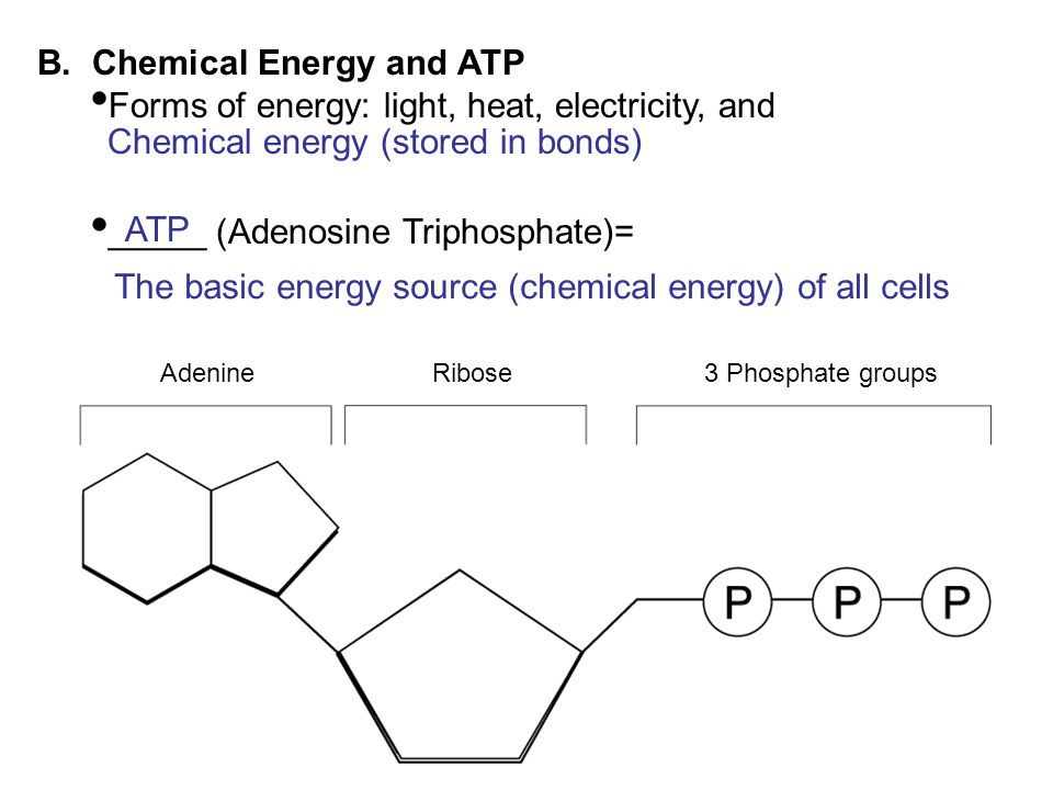 B. Chemical Energy and ATP