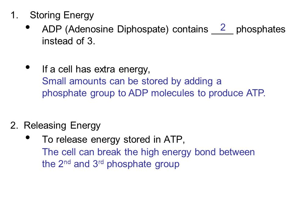 Storing Energy ADP (Adenosine Diphospate) contains ____ phosphates instead of 3. If a cell has extra energy,