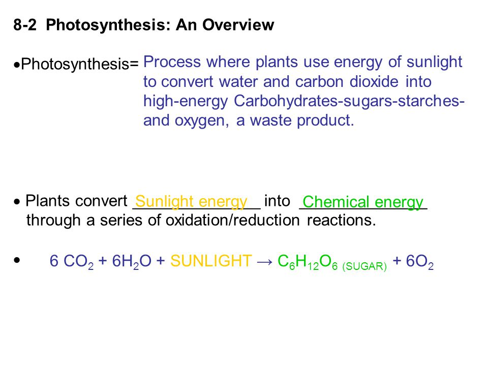 8-2 Photosynthesis: An Overview