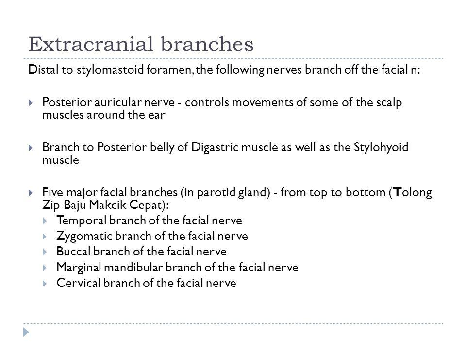 Extracranial branches