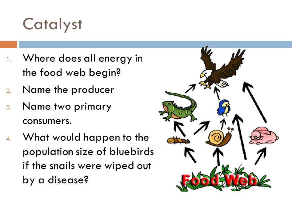 Catalyst Where does all energy in the food web begin