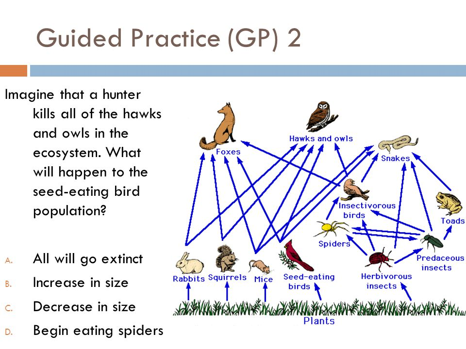 Guided Practice (GP) 2