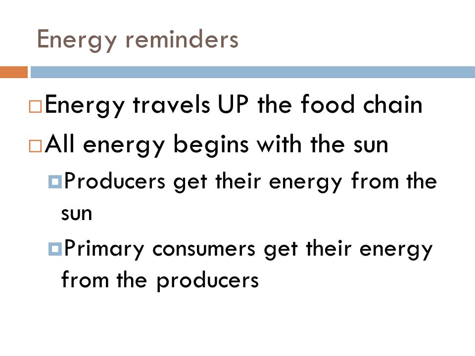 Energy travels UP the food chain All energy begins with the sun
