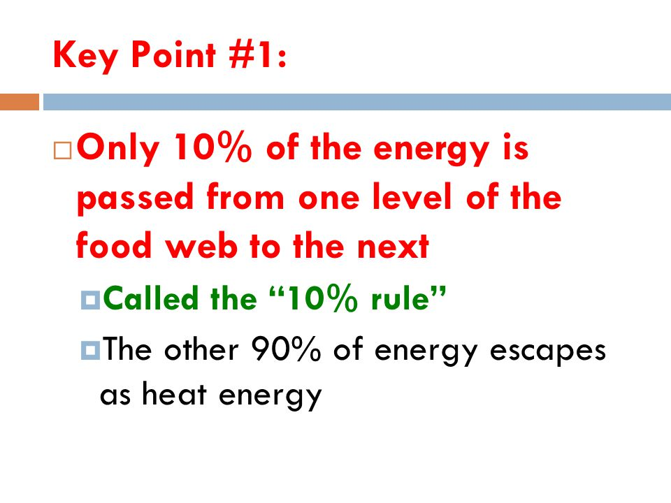 Key Point #1: Only 10% of the energy is passed from one level of the food web to the next. Called the 10% rule