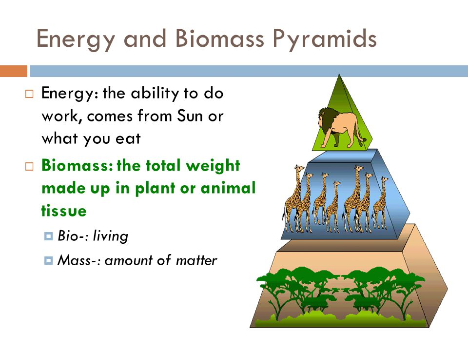 Energy and Biomass Pyramids
