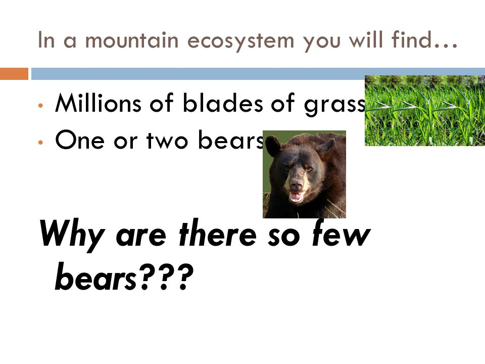 In a mountain ecosystem you will find…