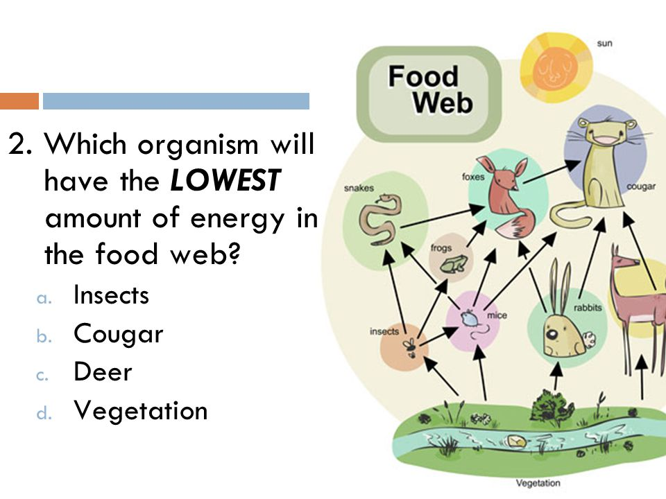 2. Which organism will have the LOWEST amount of energy in the food web