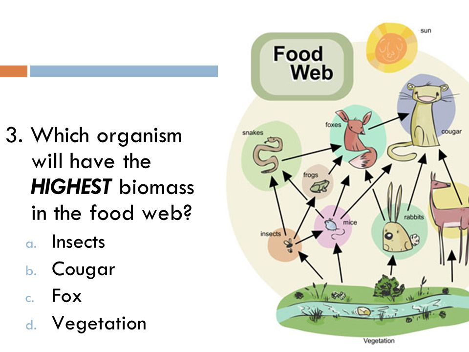 3. Which organism will have the HIGHEST biomass in the food web