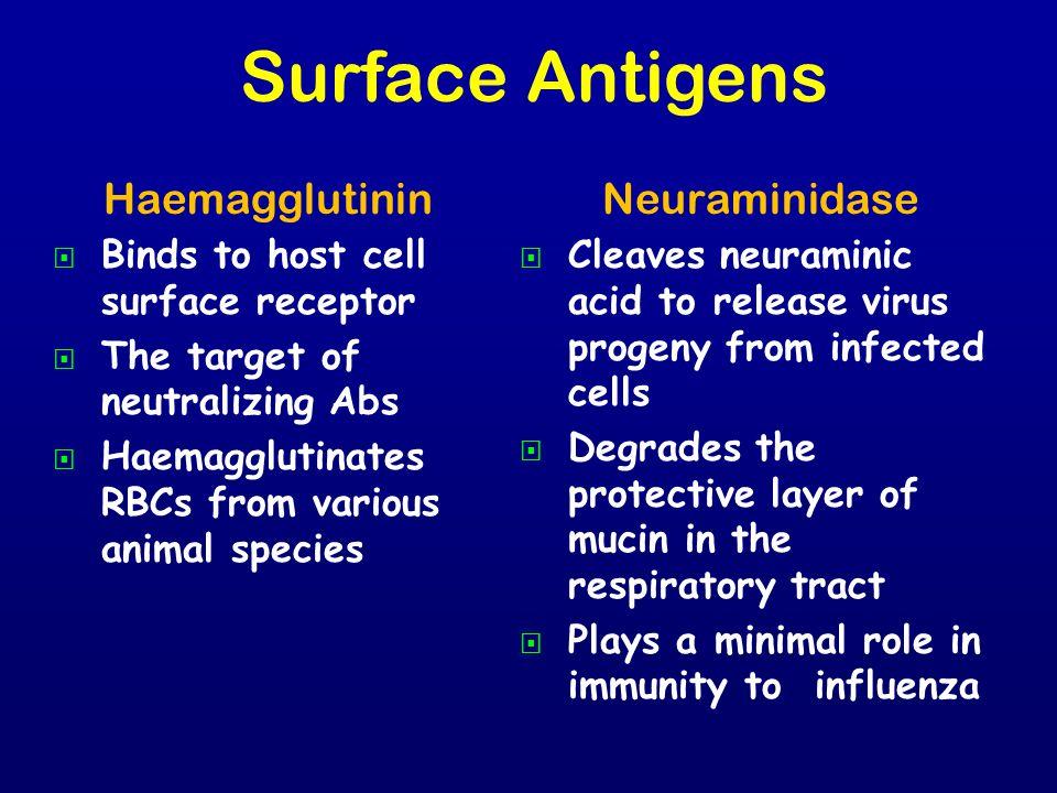 Surface Antigens Haemagglutinin Neuraminidase