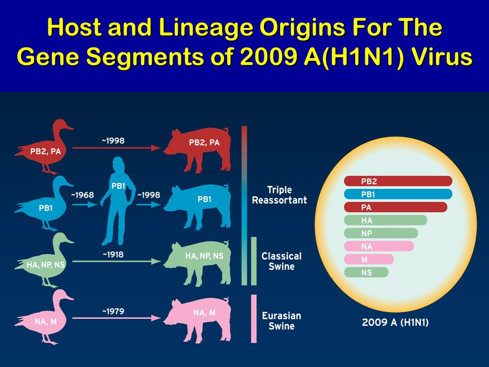 Host and Lineage Origins For The Gene Segments of 2009 A(H1N1) Virus