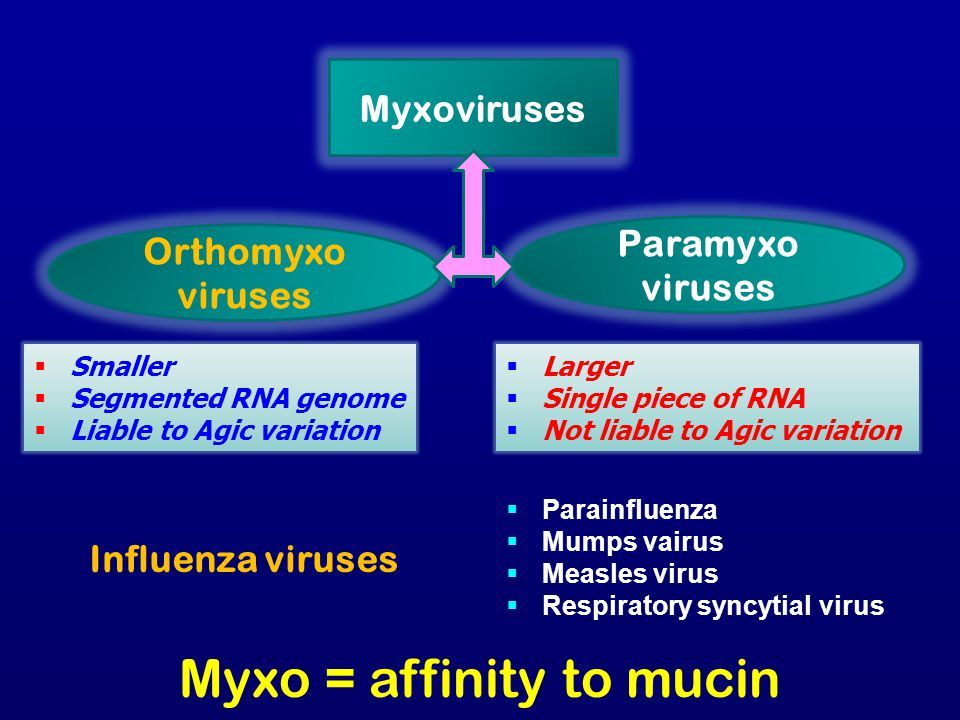 Myxo = affinity to mucin