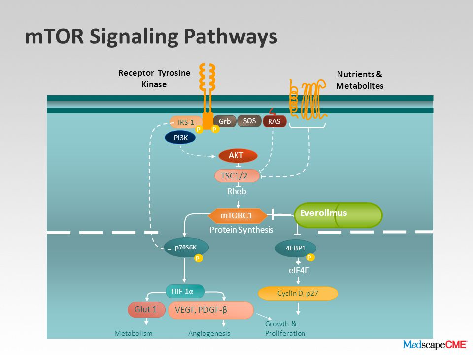 mTOR Signaling Pathways