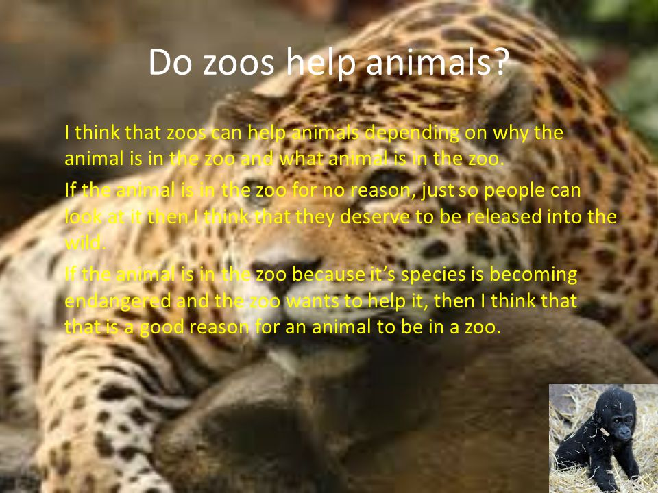 why should animals be kept in Animals should not be kept in zoos because many like wallabies, kangaroos ect are really shy and when many people are watching, pointing and taking pictures of them they have nowhere to run and nowhere to hide.