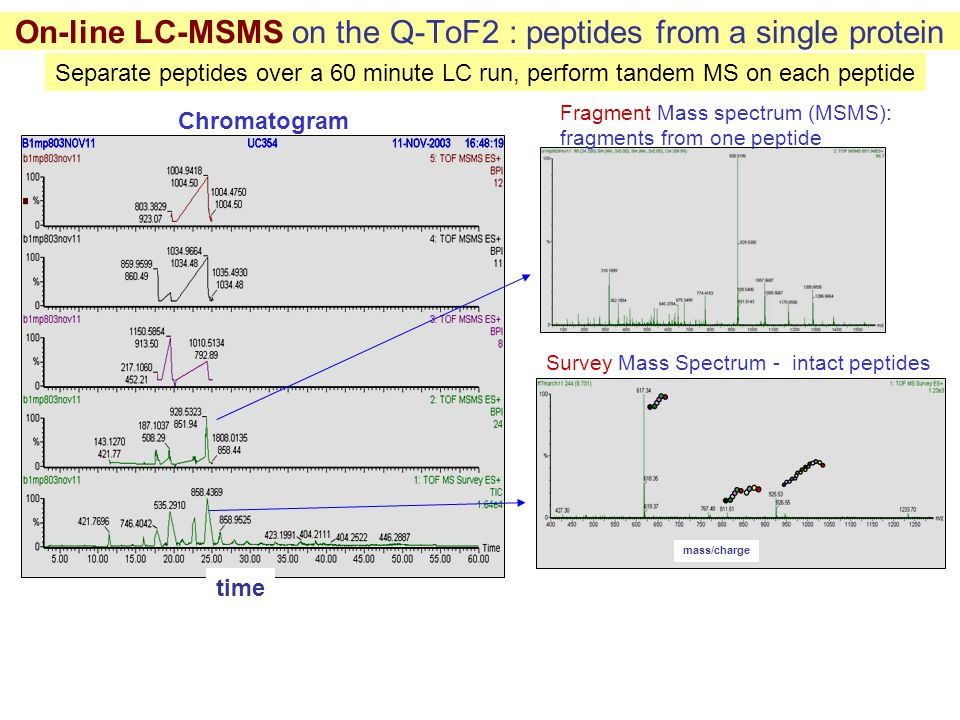 On-line LC-MSMS on the Q-ToF2 : peptides from a single protein