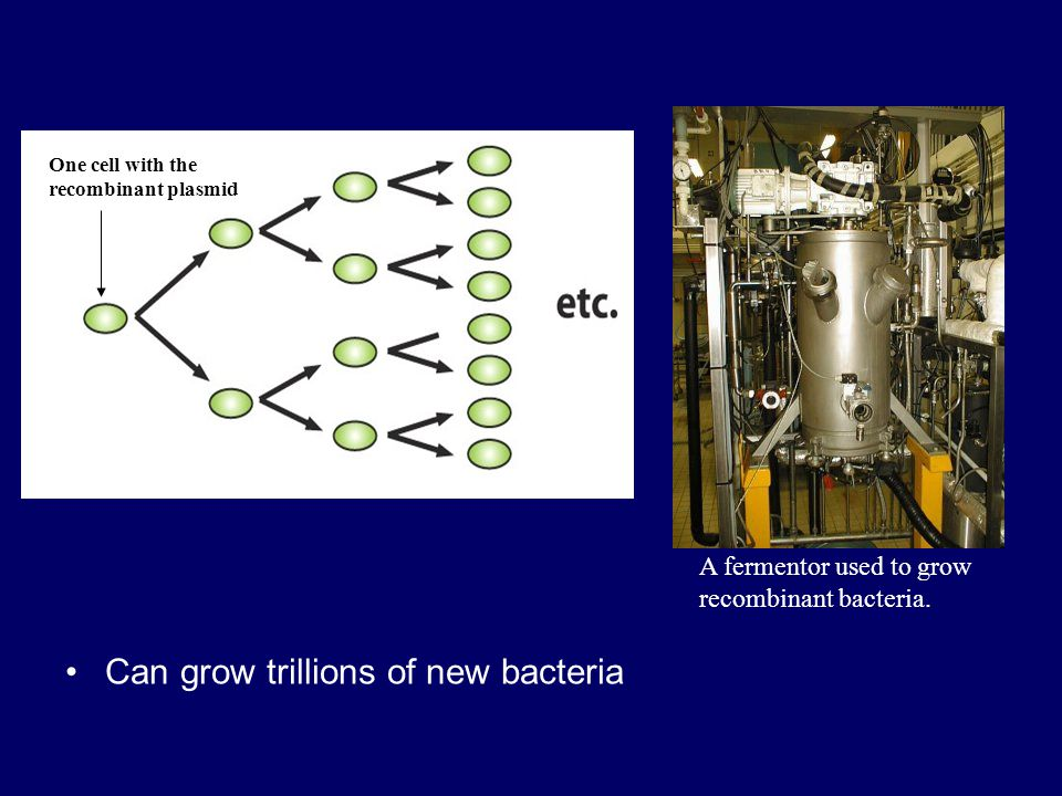 Can grow trillions of new bacteria