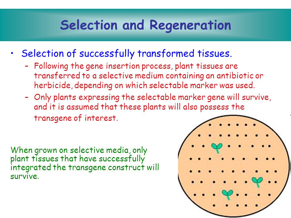 Selection and Regeneration
