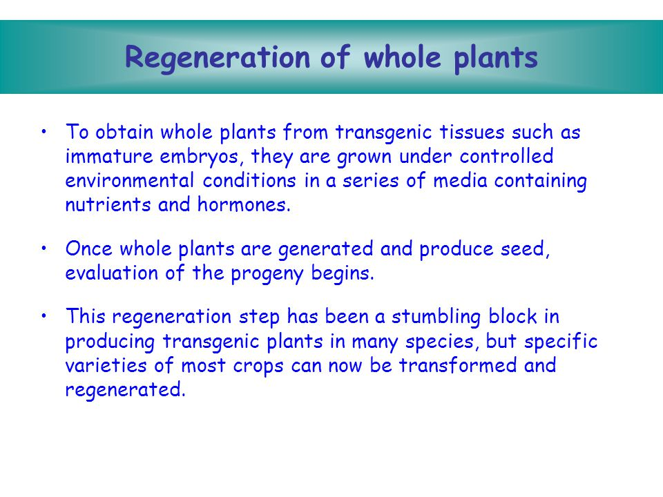 Regeneration of whole plants